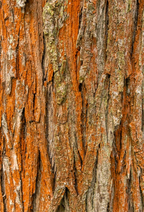 Textured backdrop of old brown tree trunk with rough uneven surface in daylight