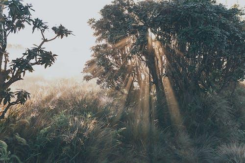 Fotos de stock gratuitas de amanecer, arboles, encuentro amanecer