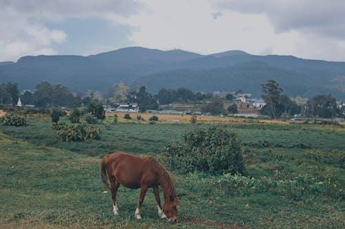 Brown Horse Eating Grass on Green Grass Field