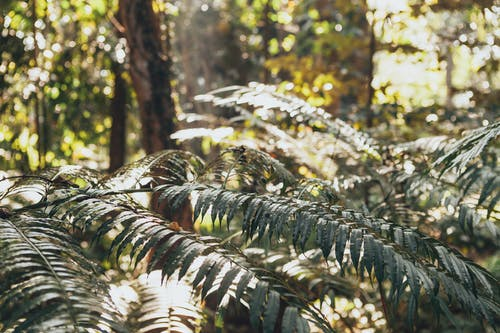 Fotos de stock gratuitas de clima tropical, Sri Lanka