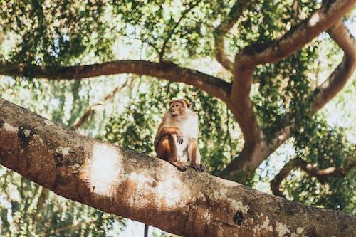 Fotos de stock gratuitas de al aire libre, árbol, ascender, ascensión