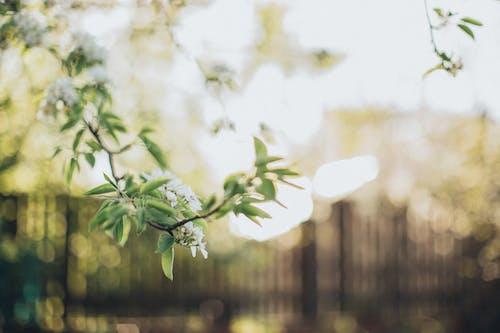 Fotos de stock gratuitas de flor de primavera, flor del ciruelo, luz del sol