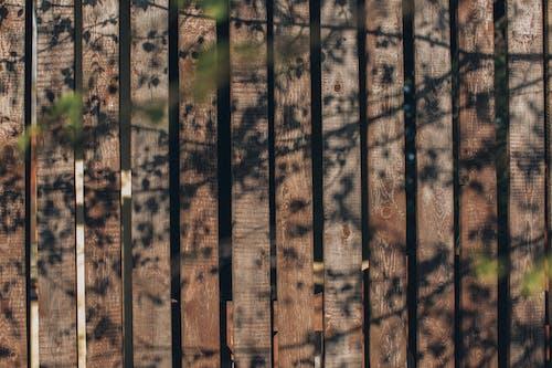 Fotos de stock gratuitas de luz del sol
