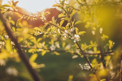 Fotos de stock gratuitas de al aire libre, amanecer, apple, árbol