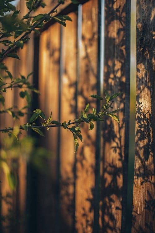 Fotos de stock gratuitas de flor de primavera, luz del sol