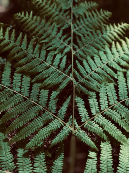 Free stock photo of feuille de fougère, nature, plante, texture