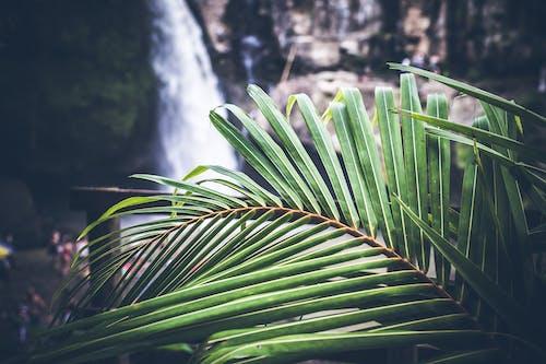 Kostenloses Stock Foto zu farben, grün, hintergrund, hübsch