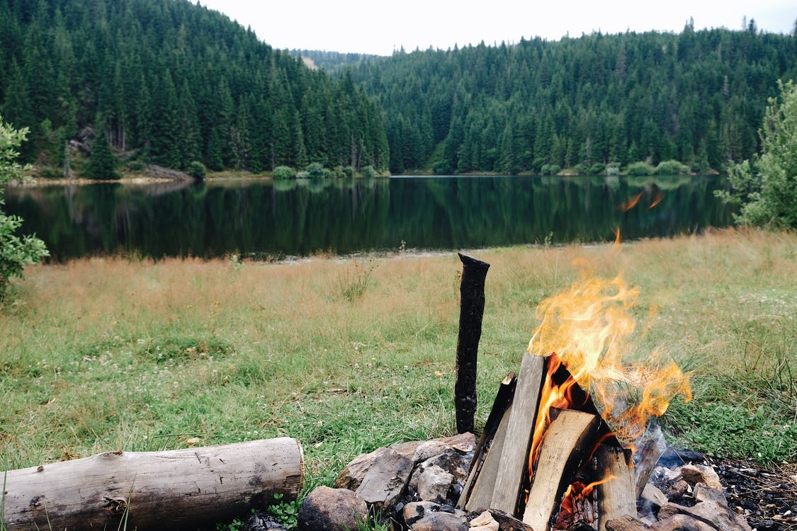 Scenery view of bright fire on burning firewood on green meadow near pond and forest