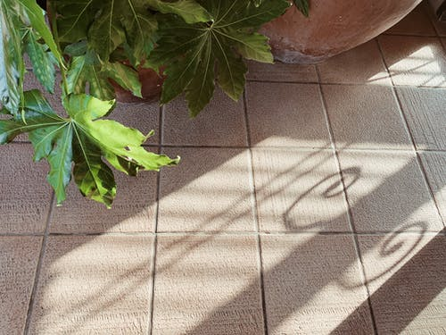 Tiled floor with potted plant and shadow