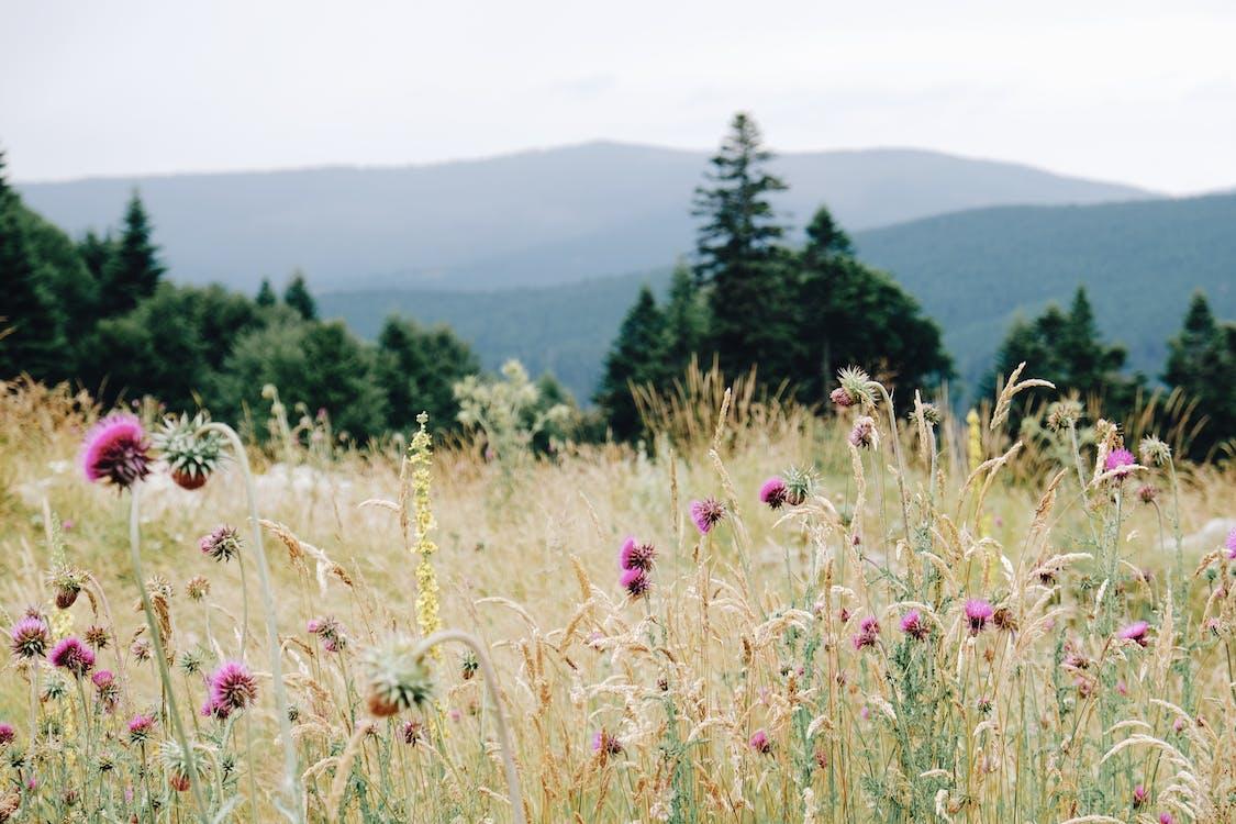 Gratis stockfoto met adembenemend, aroma, berg