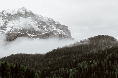 Fir forest near snowy mountain slope on foggy winter day