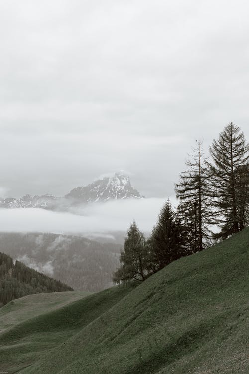 Coniferous trees growing on hill on overcast winter day