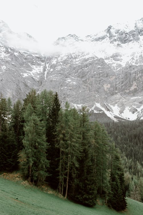 Green Pine Trees Near Snow Covered Mountain