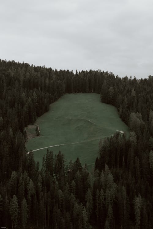 Lush coniferous forest in hilly terrain on overcast day