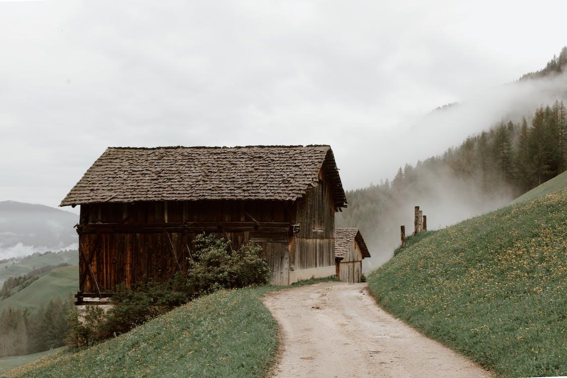 Imagine de stoc gratuită din acord, anotimp, arbori veșnic verzi