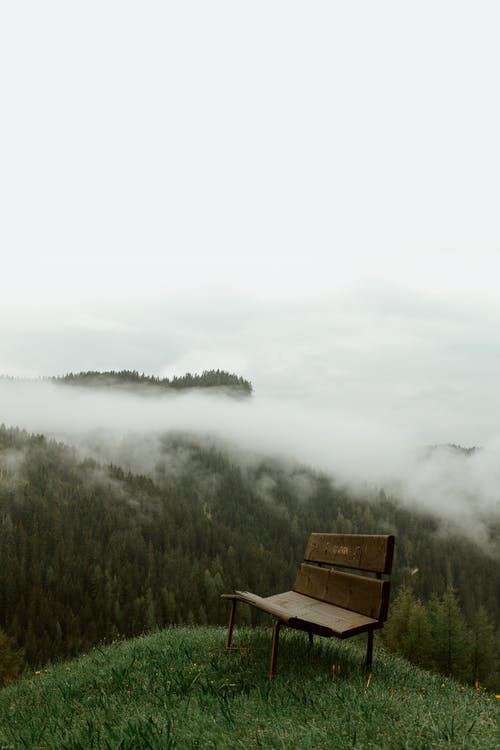 Brown Wooden Bench on Green Grass Field Near Green Trees Covered With Fog