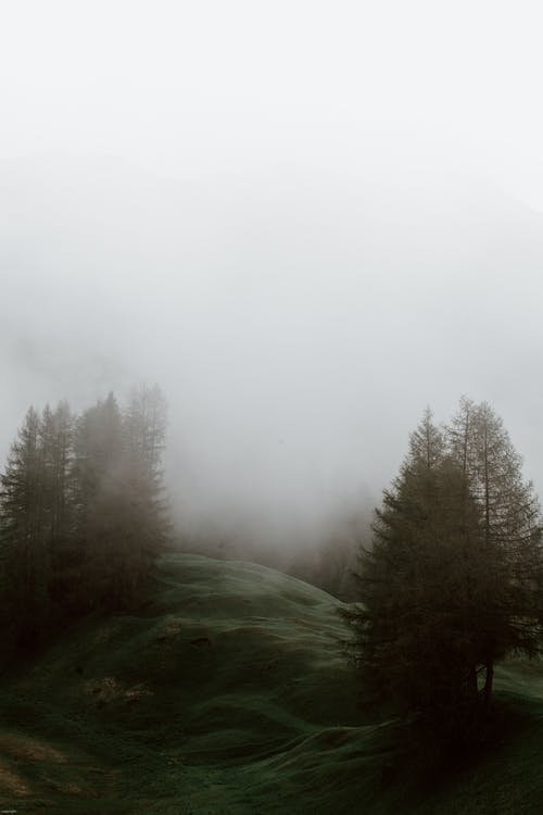 Foggy grassy meadow in coniferous forest