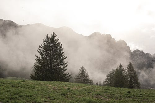 Green Pine Trees on Green Grass Field during Foggy Day