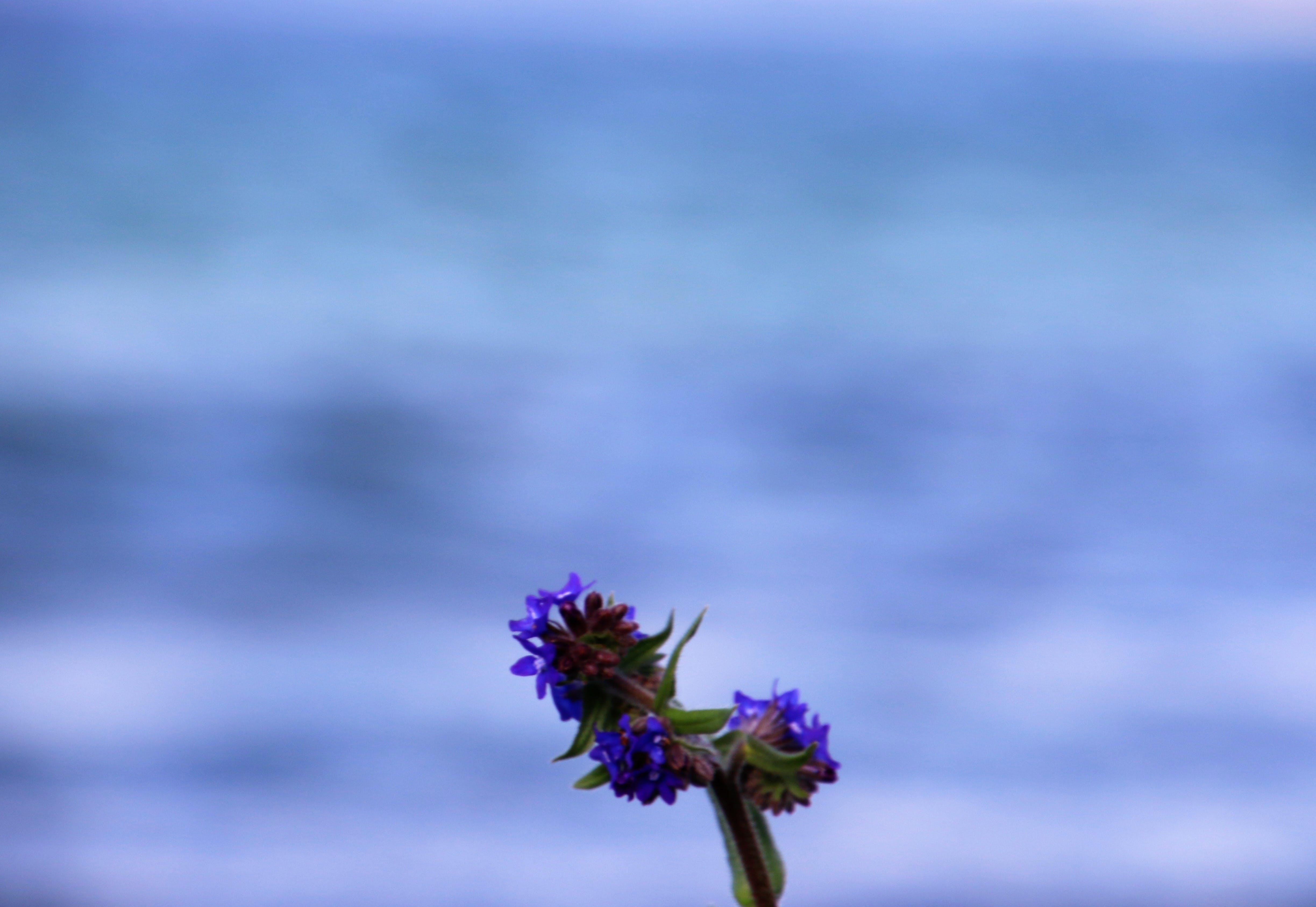 Free stock photo of blue, ocean, summer, garden