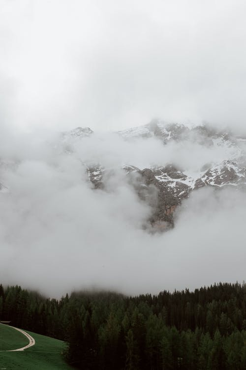 Coniferous forest against mountains in clouds