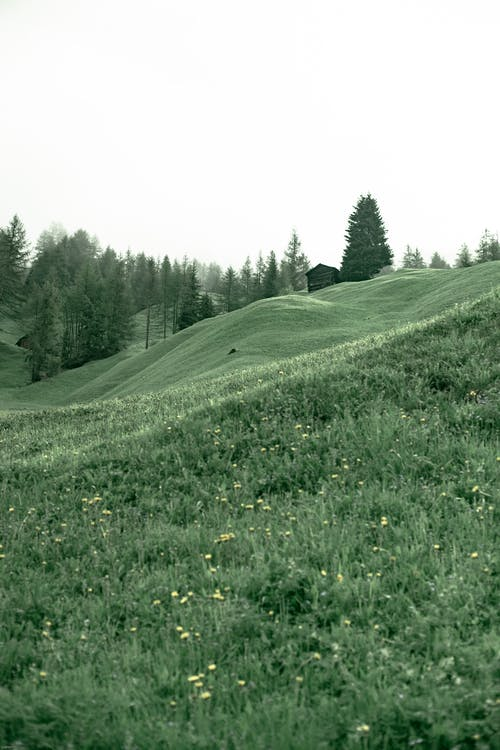 Grassy hill in highland area