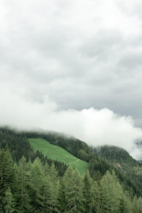 açık hava, ağaç, ahşap, arazi içeren Ücretsiz stok fotoğraf