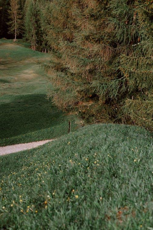 açık hava, ağaç, ahşap, çevre içeren Ücretsiz stok fotoğraf