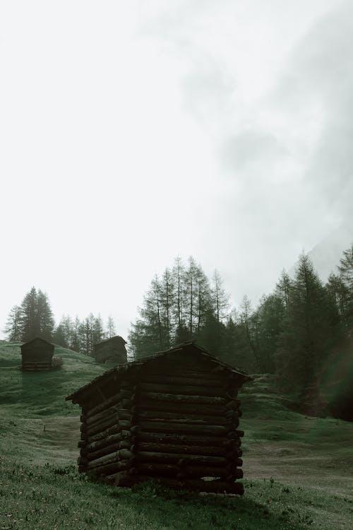 açık hava, ağaç, ahır, ahşap içeren Ücretsiz stok fotoğraf