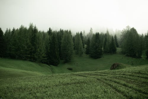 Green meadow with trees on cloudy day
