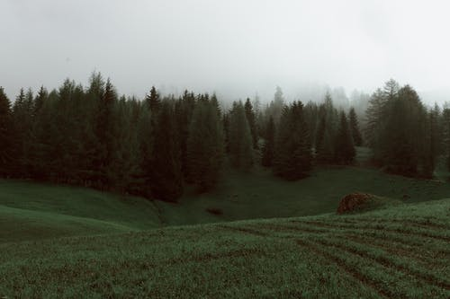 Gloomy scenery of forest in summer