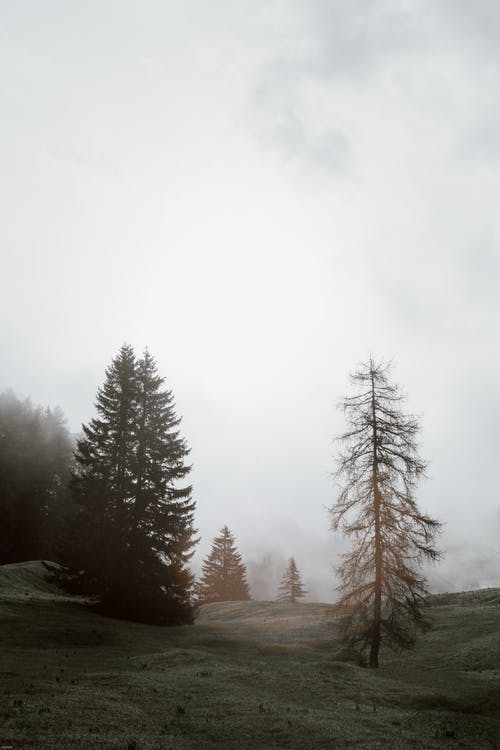 Gloomy scenery of evergreen trees growing on slope in woods on foggy day under gray sky
