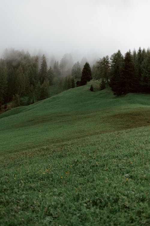 Spectacular view of grassy hill in coniferous woods on foggy day in summer