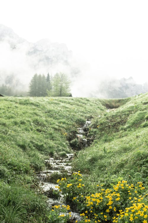 Amazing view of stream flowing down green hill on foggy day in highland area