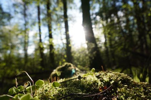 Free stock photo of forest, forest background, forest floor