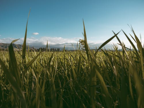 Free stock photo of beautiful landscape, clear sky, cloud