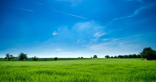 Foto d'estoc gratuïta de a l'aire lliure, a pagès, agricultura, arbres