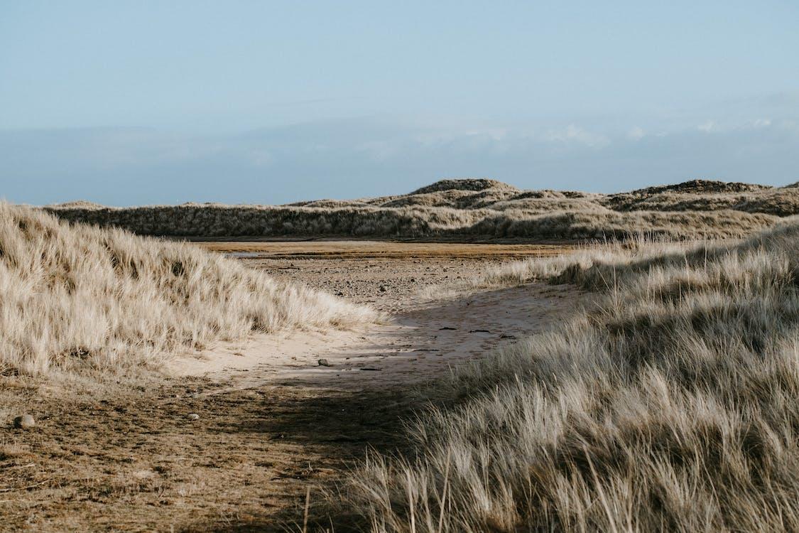 Brown Grass Field Near Body of Water