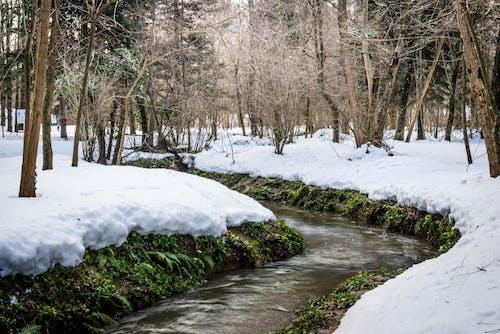 Gratis stockfoto met groen, sneeuw, watar