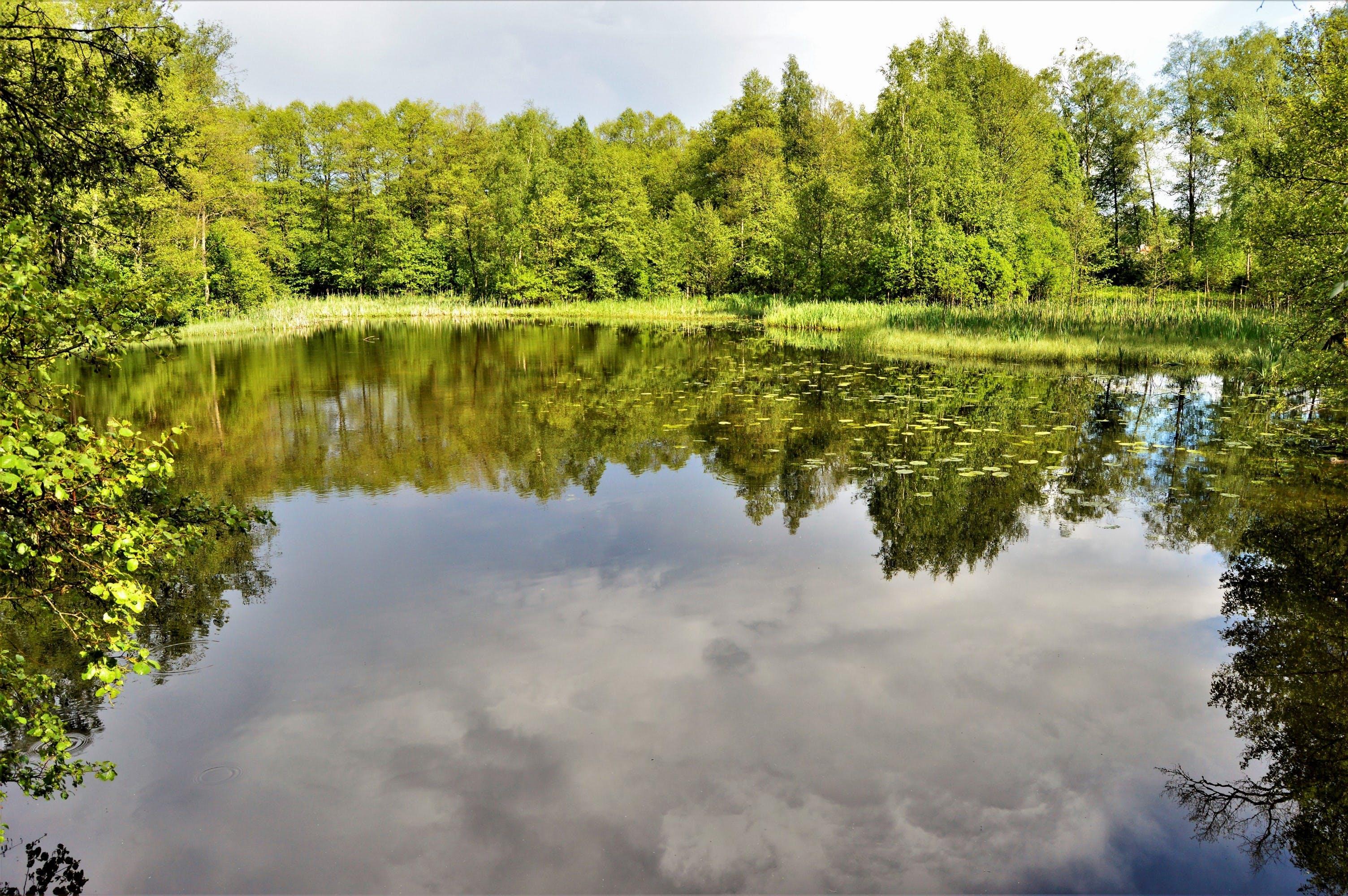 Foto stok gratis air, alam, hutan, idilis