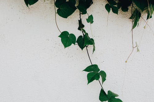 Photos gratuites de à feuilles persistantes, bâtiment, béton, biologique