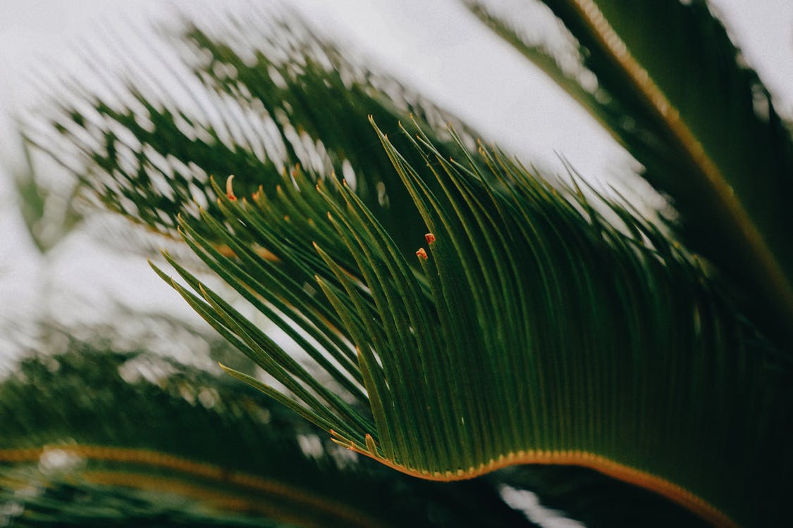 Leaves of tropical green palm tree