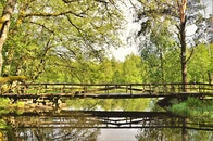 nature, water, summer