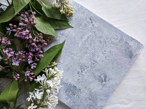 Purple and White Flowers on Gray Concrete Surface