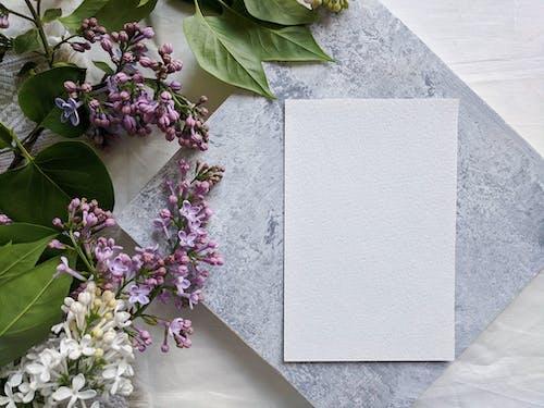 Purple Flowers on White Concrete Wall