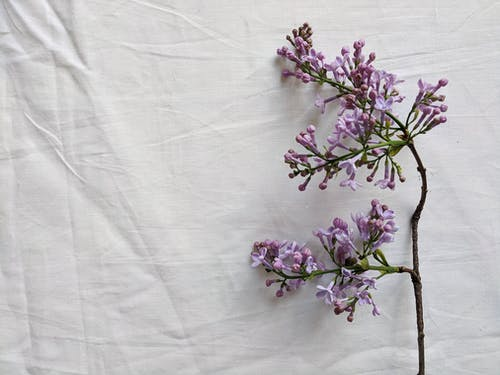 Purple Flowers on White Textile
