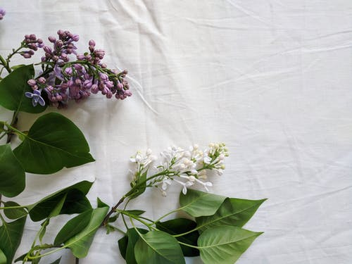 White and Purple Flower on White Textile