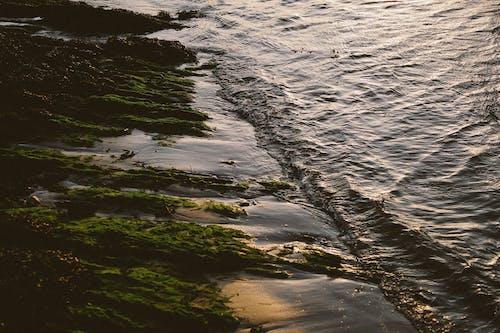 Foto d'estoc gratuïta de , a l'aire lliure, acomiadar-se, aigua