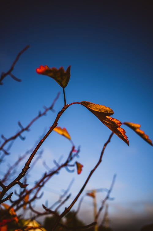 Free stock photo of autumn, blue, branch, fall