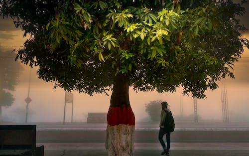 Free stock photo of #mobilechallenge, beatiful landscape, foggy day, lightroom