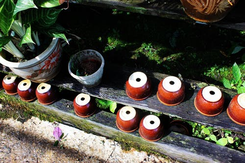 Free stock photo of botany, garden, green, plant